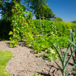 Stockfoto: Vegetable garden