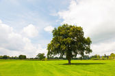 Single tree in green meadows — Stock Photo