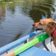 Dog in rowing boat — Stock Photo