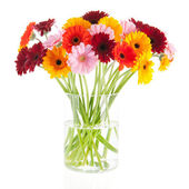 Bouquet Gerber flowers in glass vase — Stock Photo