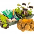 Vegetables for gardening — Stock Photo