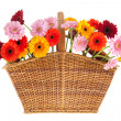 Wicker full with Gerber flowers — Stock Photo