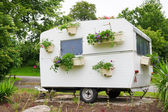 Flowers at the camping — Stock Photo