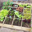 Foto Stock: Vegetable garden