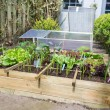 Vegetable garden — Stockfoto #26583989