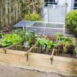 Vegetable garden — Stock Photo #26583989