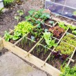 Vegetable garden — Stockfoto #26586177