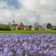 Village Den Hoorn at Dutch Texel — Stock Photo