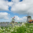 Windmills at Dutch Zaanse Schans — Stock Photo #29702139