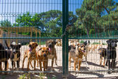 Dog shelter in Spain — Stock Photo