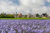 Dorp den hoorn op nederlandse texel — Stockfoto
