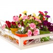 Little Dianthus on white tray — Stock Photo
