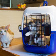 Siamese mother cat with kitten in cage — Stock Photo