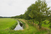 Row trees with ditch — Stock Photo