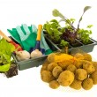 Stock Photo: Vegetables and herbs for vegetable garden
