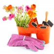 Stock Photo: Colorful buttercups for gardening
