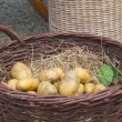 Potatoes in basket — Stock Photo #34573055