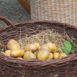 Potatoes in basket — Stock Photo