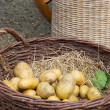 Potatoes and vegetables in baskets — Stock Photo