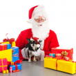 Stock Photo: Little dog as gift for Christmas