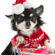 Dog shopping for Christmas — Stock Photo