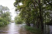 Flooding with trees in water — Stock Photo