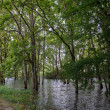 Stock Photo: Flooding with trees in water