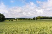 Agricultural landscape in France — Stock Photo