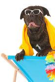 Sommer-hund — Stockfoto