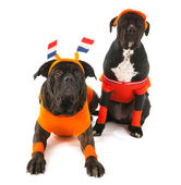 Chiens comme les supporters de football néerlandais — Photo