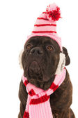 Dog in winter time — Stock Photo
