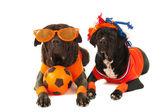 Perros como los fanáticos del fútbol holandés — Foto de Stock