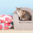 Stock Photo: Siamese cat in chair