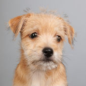 Cute little puppy — Stock Photo