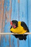 Rolig kyckling med gul tröja — Stockfoto