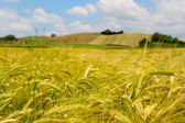 Agricultural landscape in France — Stock Photo