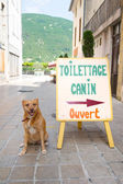 Dog toilet in France — Stock Photo