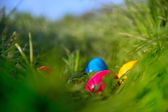 Easter eggs in grass — Stockfoto