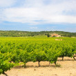 Vineyard in south-France — Stock Photo #45460691