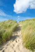 Sand dunes at the coast — Stock Photo