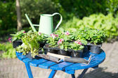 Plants for the garden — Stock Photo