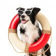 Border collie as beach guard — Stock Photo #47933217