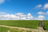 Dutch dike with sheep — Stock Photo