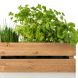 Kitchen herbs in wooden crate — Stock Photo