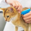 Microchip implant by cat — Stock Photo #49134385