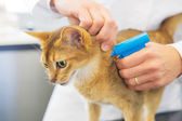 Microchip implant by cat — Stock Photo