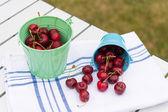 Harvest of cherries — Stock Photo