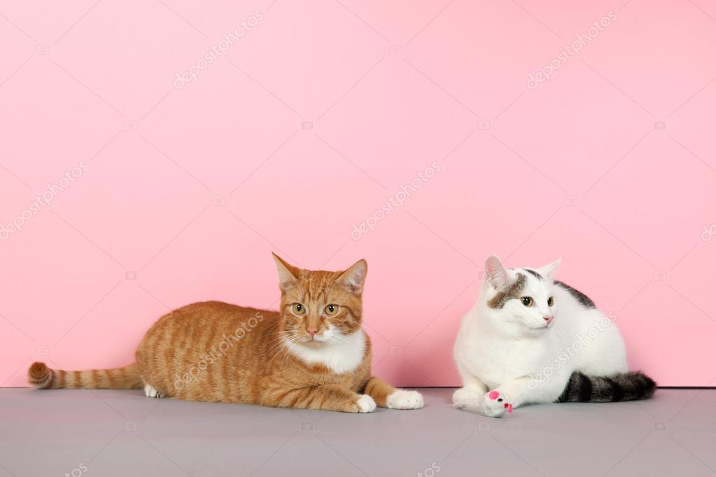 Игра черный и белый кот