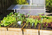 Vegetable garden — Photo