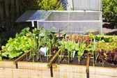 Zeleninová zahrada — Stock fotografie
